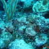 Stonefish: Another Perspective