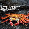 Galapagos by Diver Ed
