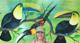 Corn Islands, Nicaragua - last post by Jimmi