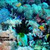 PI Reef