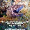 cc2015 Blakc Eel FLORIDA P1100802