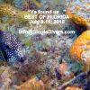 cc2015 Box Fish FLORIDA P1100791