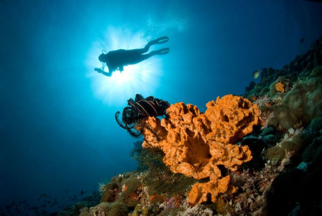Diver And coral sunlight Carpe Vita Explorer Maldives Explorer Ventures Liveaboard Diving