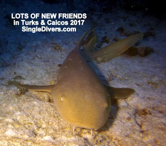 2017 T&C Nurse Shark FRIENDS GOPR2855
