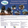 Cozumel Coral Reef Restoration Pic