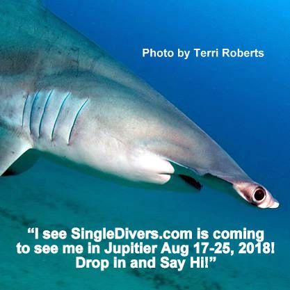 2018 POSTER BOF Terri's Shark
