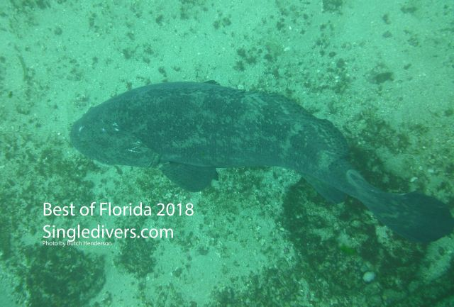 Grouper Above