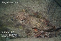 Frederiksted Pier Scorpion Fish Pair