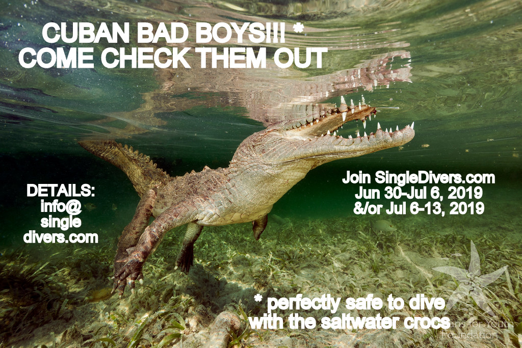 POSTER Cuba 2 salt croc
