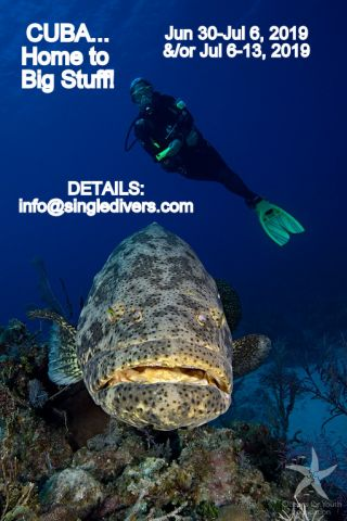 POSTER Cuba 6 Goliath   Diver
