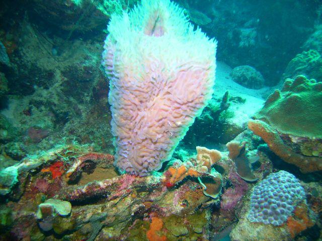 2013 Bonaire 031