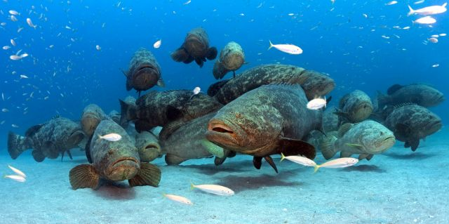 GROUP OF GROUPER CC